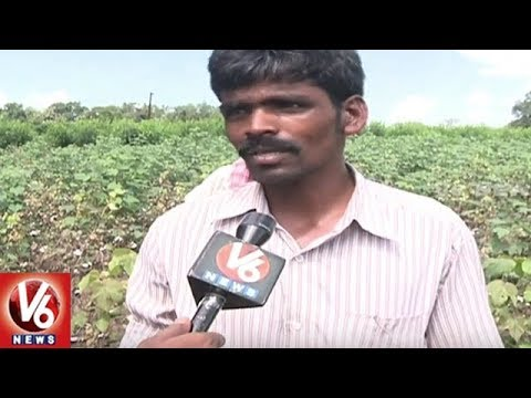 Special Report On Major Crop Loss Due To Heavy Rains | Telangana | V6 News