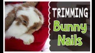 Rabbit Nail Trimming & Health Checkup thumbnail