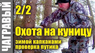 Охота на куницу капканами 15 фев 2017   будни охотника