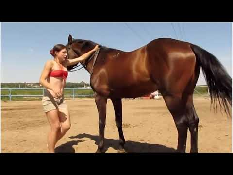 Mean Girl Abuses Horse OR Nice Girl Plays and Enjoys Her Horse - What Did The Horse Learn