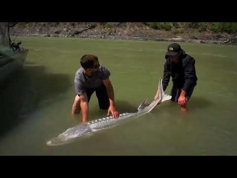 2nd Episode With Outdoor Channel's MONSTER FISH Featuring River Monster Adventures