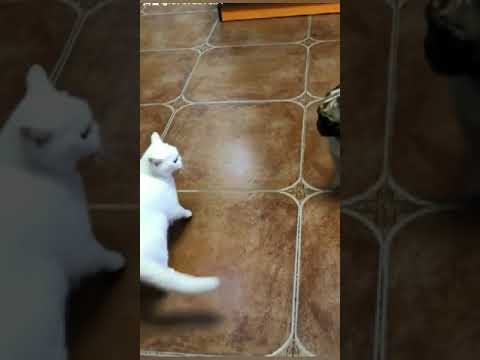 Dog And Cat Fighting  -  Dog VS Cat Funny Fights Compilation
