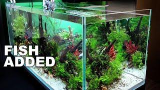 4ft Asian Fish Peninsular Aquarium | MORE FISH | MD FISH TANKS