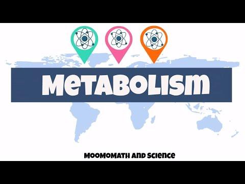 introduction to metabolism | Biology basics|