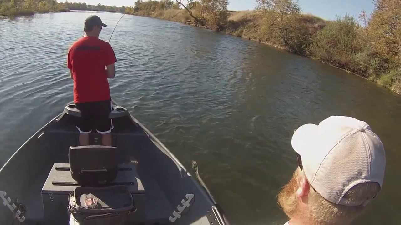 Fly Fishing Steelhead On The Feather River Northern
