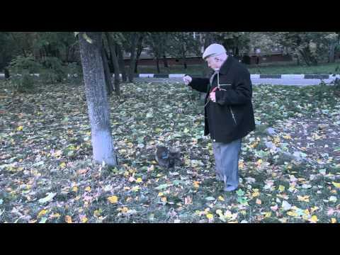 Багира - Как снимали клип Листопад