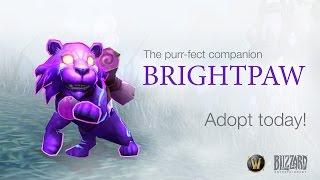 New World of Warcraft Pet: Brightpaw