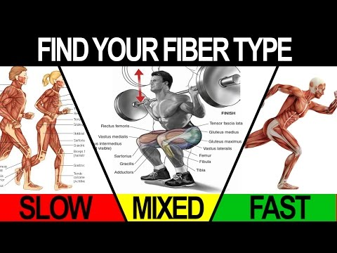 gym-workouts-to-build-muscle-(train-to-maximize-your-fiber-type!)