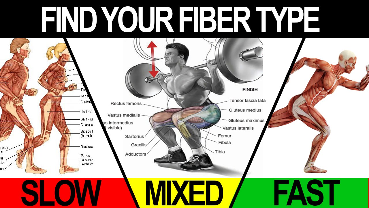 Gym Workouts to Build Muscle (TRAIN TO MAXIMIZE YOUR FIBER ...