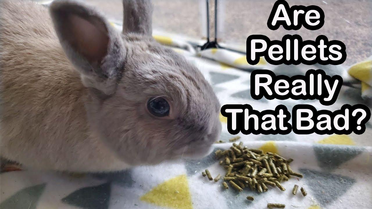 Rabbit Food: Pellets vs. Whole Foods