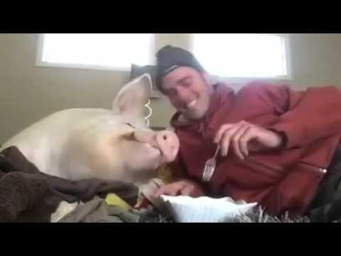 Так и не придумал название,мужик и свинья прикол
