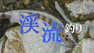春の渓流釣り!まさかの先行者と…?Mountain stream fishing