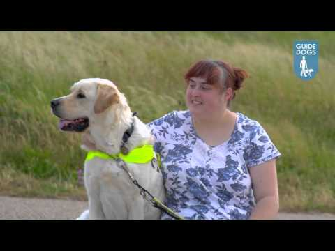 Guide and assistance dogs film - Services