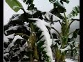 First Ever Recorded Snow 300km South Of Hanoi Vietnam 18°N Latitude | Mini Ice Age 2015-2035 (123)