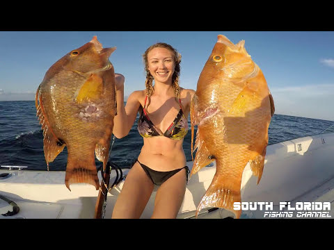 Find Hogfish And Grouper Spearfishing Key Largo