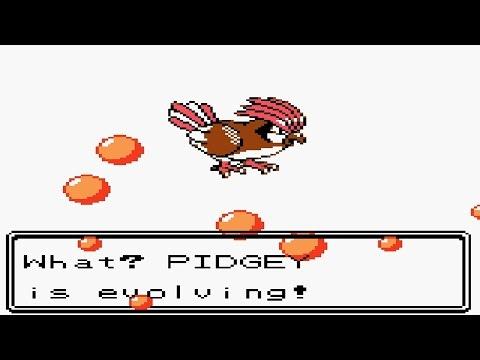 Pidgey Evolves Into Pidgeotto In Pokemon Crystal