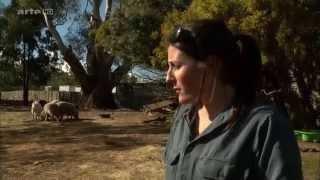 ARTE - 360 Geo Reportage Tasmanischer Teufel