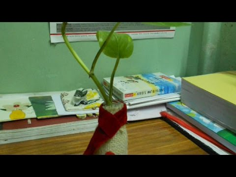 Make a Cute Indoor Plant Bottle - DIY Home - Guidecentral
