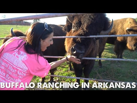 Buffalo Ranching in Arkansas with a Rock Star from Trans Siberian Orchestra