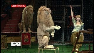 «Белых львов Африки» можно увидеть в Сочи