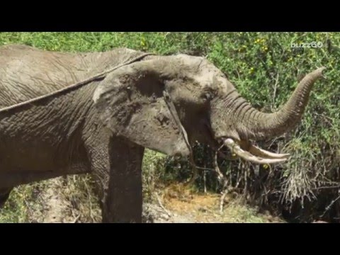 Community comes together to rescue elephant trapped in mud pit