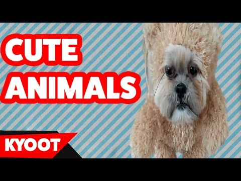 Funniest Cute Animal & Pets Home Video Bloopers of 2016 Weekly Compilation | Kyoot Animals