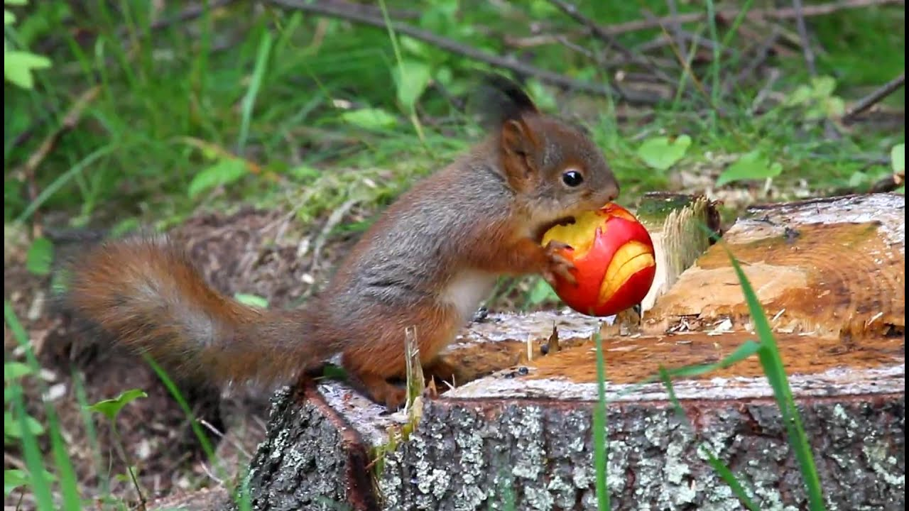 Squirrel Eating Brains Out - YouTube