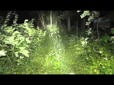 Zebralight H602w total floody headlamp in the forest