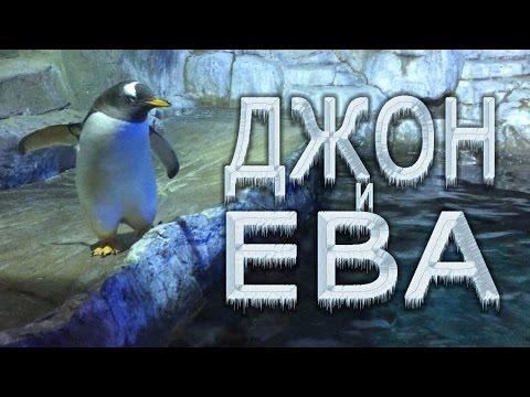 Вопрос: Где в Южной Америке живут пингвины?