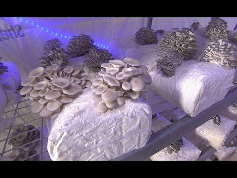 Buy Fresh Buy Local: Nebraska Mushroom