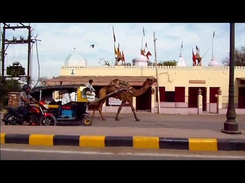 India Travel: Tour of Bikaner & Junagarh Fort, Rajasthan