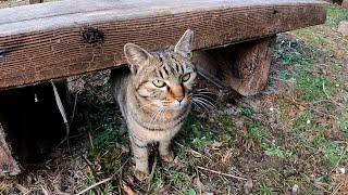 ベンチの下にキジトラ猫がいたのでナデナデしたらゴロゴロ言いながら隣に座ってきた