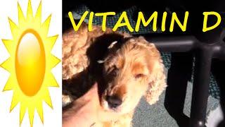 Sunshine And Vitamin D With Zac's Dog