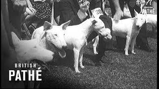 Canines - 50,000 Attend No. 1 Dog Show Aka Us Dog Show Lner (1938)