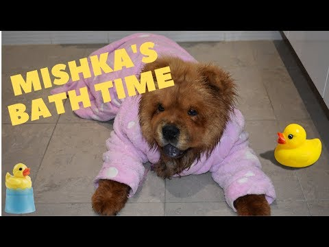My dog doesn't want to take a bath | Mishkachow funny bathing