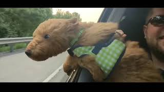 TRY NOT TO LAUGH      Funny Dogs Fails Compilation