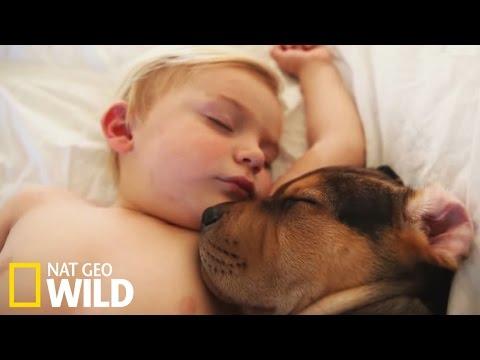 Une émouvante relation entre un chien et un enfant - Drôles d'amis