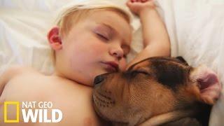 Une émouvante relation entre un chien et un enfant - Drôles d