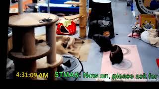FFRC cats Derecho's elusive tail, Courage, Ian, Killian, Wigglesworth