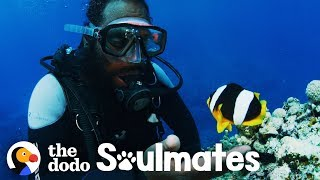 Clownfish Named Nemo Has 10-Year Friendship With This Diver   The Dodo Soulmates