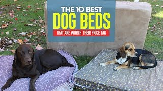 Top 10 Best Dog Beds of 2018 (Tested and Reviewed)