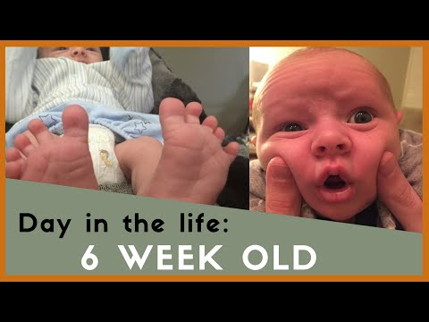 Day in the Life- 6 Week Old Baby