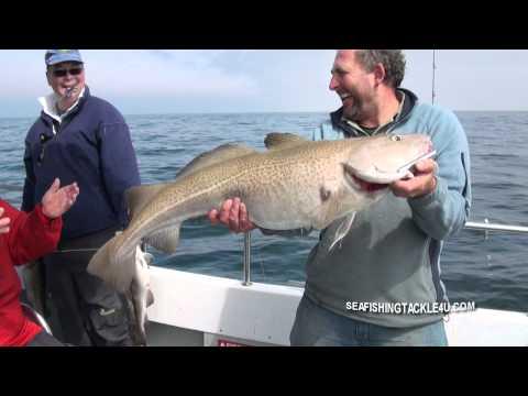 Pirking For Big Cod In The English Channel