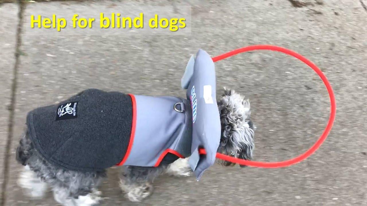 Dog Halo Blind Dogs Goldenacresdogs Com