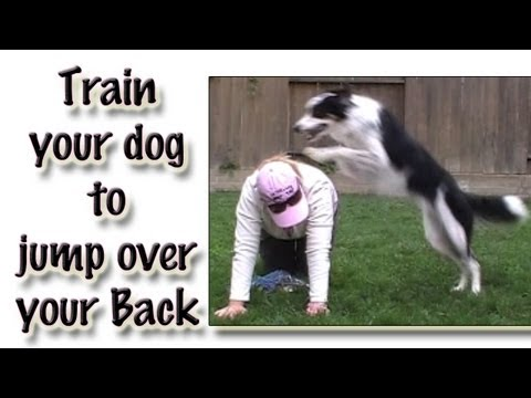 Jumping Over Your Back: Clicker Dog Trick Training