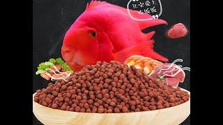 fish food extruder video  оборудование для производства рыбных кормов.