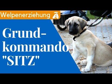"""Grundkommando Nr. 1 """"Sitz"""" beibringen / Mia and Me DogTV"""