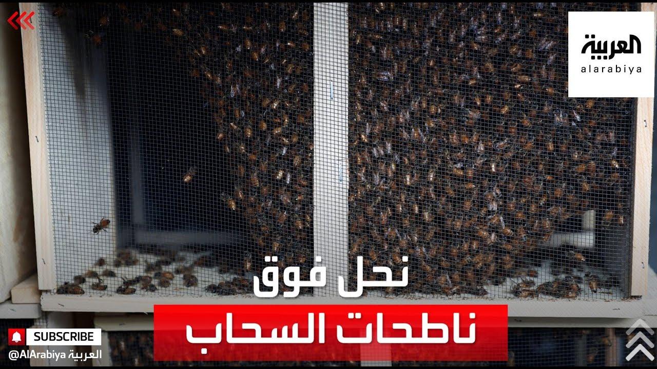 بعيدا عن المزارع.. تربية النحل فوق ناطحات السحاب في نيويورك  - نشر قبل 3 ساعة