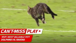 How Did a Cat Get on the Field!? 😹 | Dolphins vs. Ravens | NFL Wk 8 Highlights