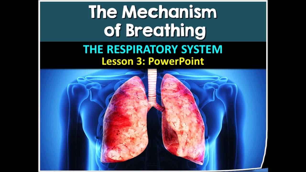 Respiratoryanatomy Power Point: Respiratory System Lesson #3 PowerPoint (by Tangstar
